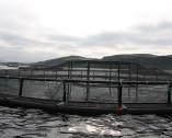 Reti per allevamenti ittici
